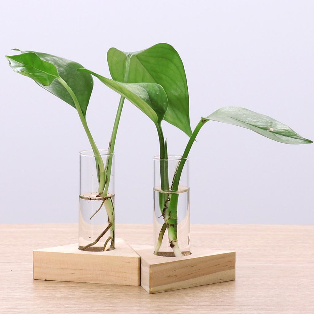 2pcs Glass Test Tube Vase Flowers Plants Hydroponic Planter Wooden Stand