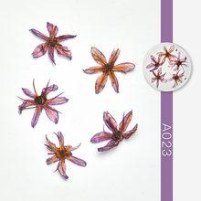 ผสมแห้งดอกไม้ตกแต่งเล็บธรรมชาติใบสติกเกอร์ 3D การออกแบบเล็บ Polish Manicure อุปกรณ์เสริม(China)