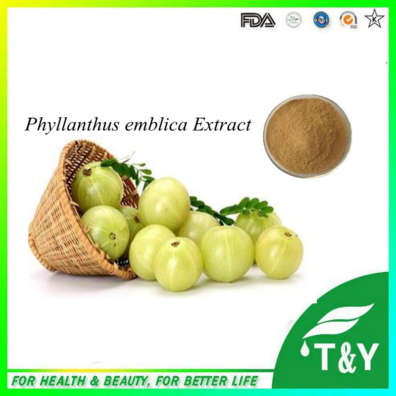 GMP factory Phyllanthus Emblica Extract, powder  5:1 10:1 20:1  400g/lot<br><br>Aliexpress