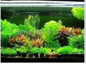 Free Shipping Hot selling 300pcs aquarium grass seeds (mix) water aquatic plant seeds (15 kinds) family easy plant seeds(China (Mainland))
