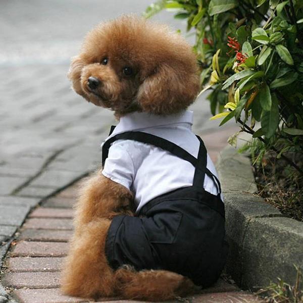 Pet Dog Cat Clothing Prince Tuxedo Bow Tie Suit Puppy Costume Jumpsuit Coat S-XL