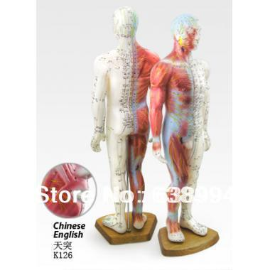 English User Manual Male Human Acupuncture Points and Muscle Model 55CM(China (Mainland))