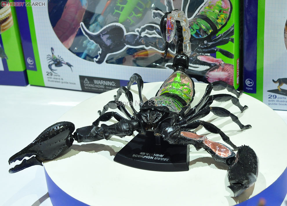 Compre Al Por Mayor 4d Master Vision Scorpion Modelo Anatomy Modelo ...