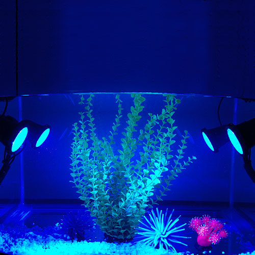 online kaufen gro handel aquarium unterwasser licht aus china aquarium unterwasser licht. Black Bedroom Furniture Sets. Home Design Ideas