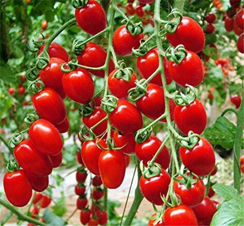 vert cerise tomate promotion achetez des vert cerise tomate promotionnels sur. Black Bedroom Furniture Sets. Home Design Ideas