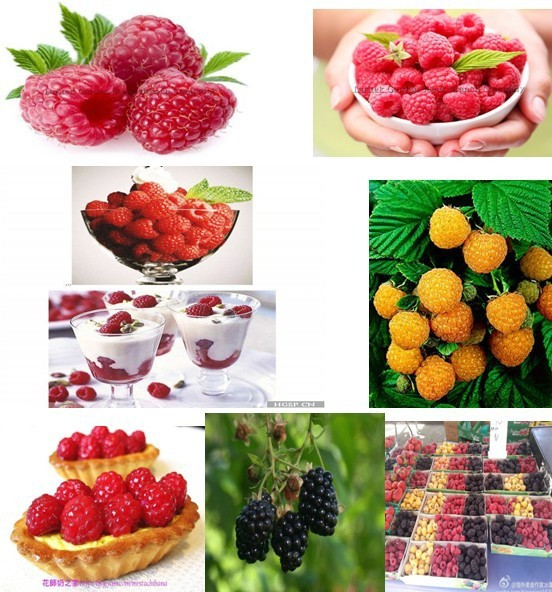 Hot sale 3 kind of color raspberry seeds , yellow 30 ,black 30,red 30 .Total 90 seeds ,top 50 buyers, Send mysterious gift !(China (Mainland))
