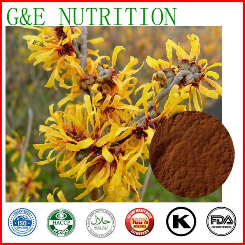 GMP factory supply Herb natural Witch hazel extract 600g<br><br>Aliexpress