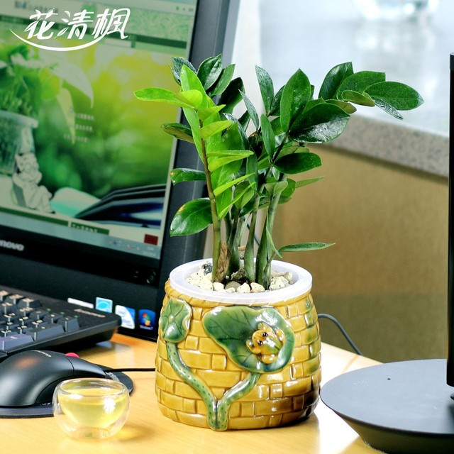 Bonsai lucky fortune indoor hydroponic plants frog paragraph