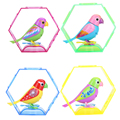 20 Songs Singing Sound Birds Pets Sing Solo or in a Choir Intelligent Music Bird for