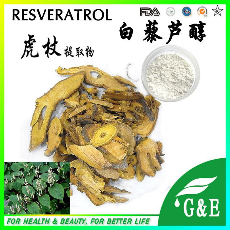 Pure natural giant knotweed extract resveratrol synthetic resveratrol 300g(China (Mainland))