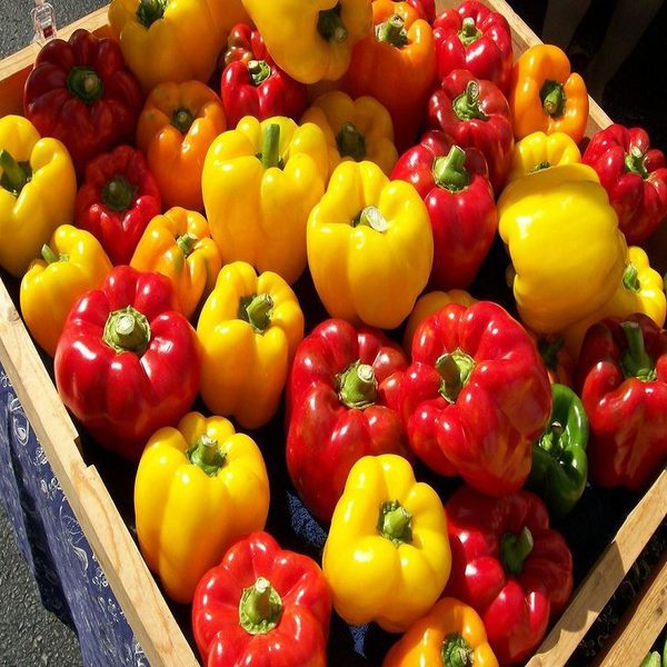 vegetable 2016 new high quality 1 bag 20 seeds colorful