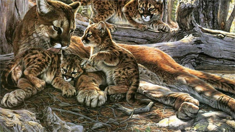 Tiger Puma Cub Cubs Big Cats Nature Wildlife Cheetah Lion Baby Animals Animal Family Home Decoration Canvas Poster(China (Mainland))