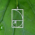 Drop shipping Fibonacci Golden ratio pendant Black Silver plated necklaces pendants jewelry accessories for women