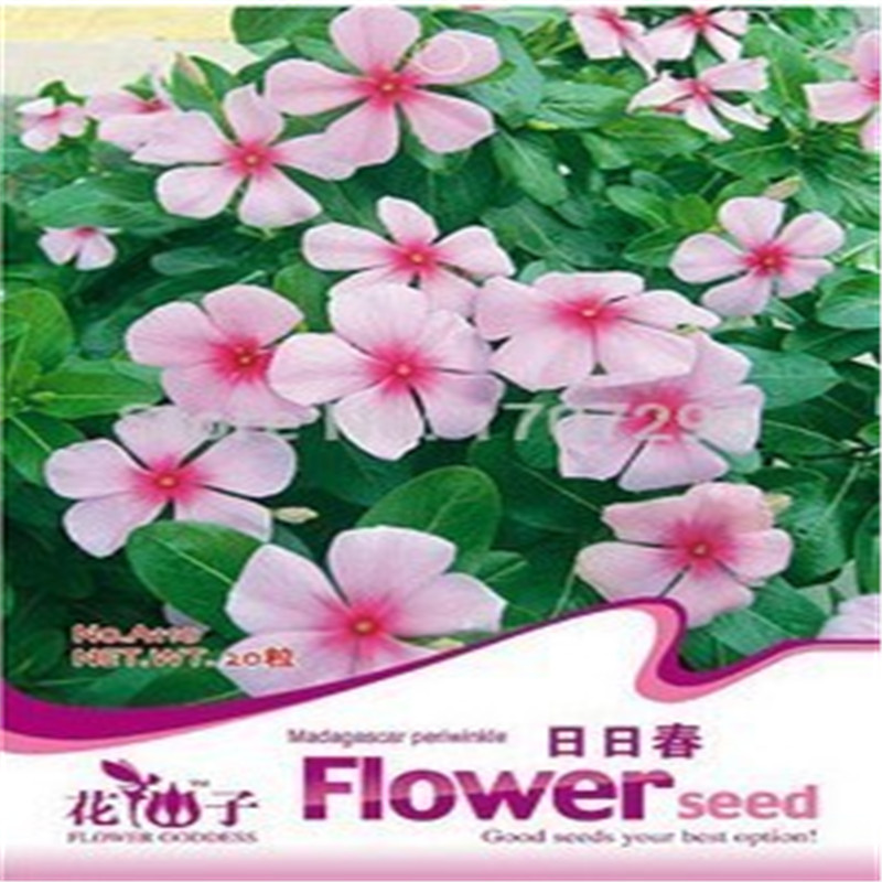 Wholesale Choi bags balcony potted flower seed,Vinca Seeds 20 particles