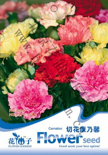 Free Shipping 3 Packs 90 of Mixed Color Carnation Seeds,Dianthus Caryophyllus Flower Seed J006