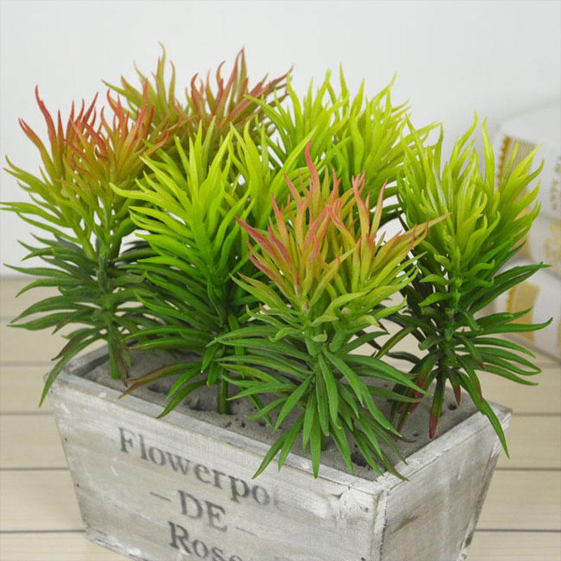 grass desert plants flowers garden succulent desert landscape