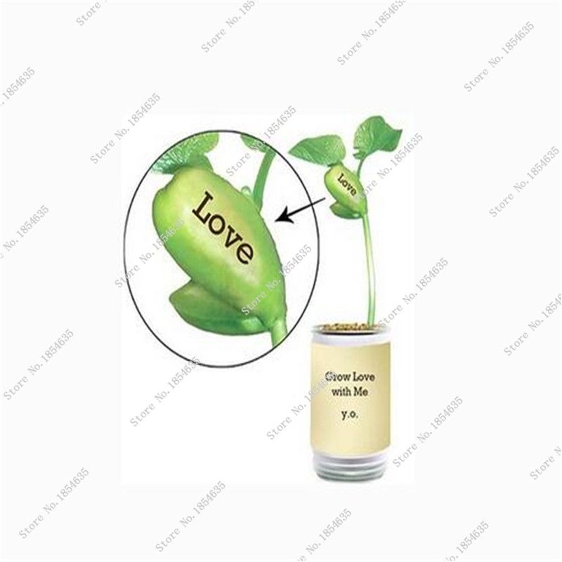 100% Growth Rate Jack Bean English Magic Bean Magic Growing Message White Beans Seeds Free Shipping(China (Mainland))