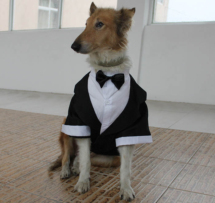 Large Dog Formal Wear