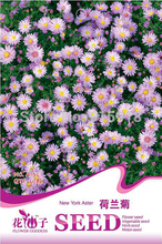 Buy 2 Get 1!(Can accumulate ) 1 Pack 50 Seed cute pink new york aster flower seeds A165(China (Mainland))