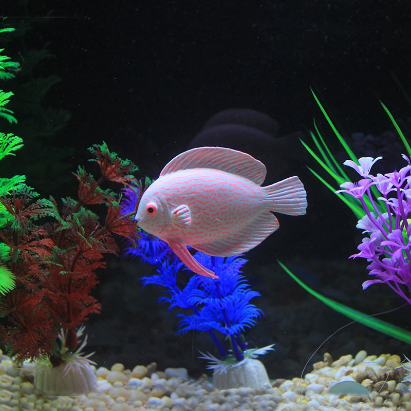 Online buy wholesale tropical fish tank from china for Wholesale tropical fish