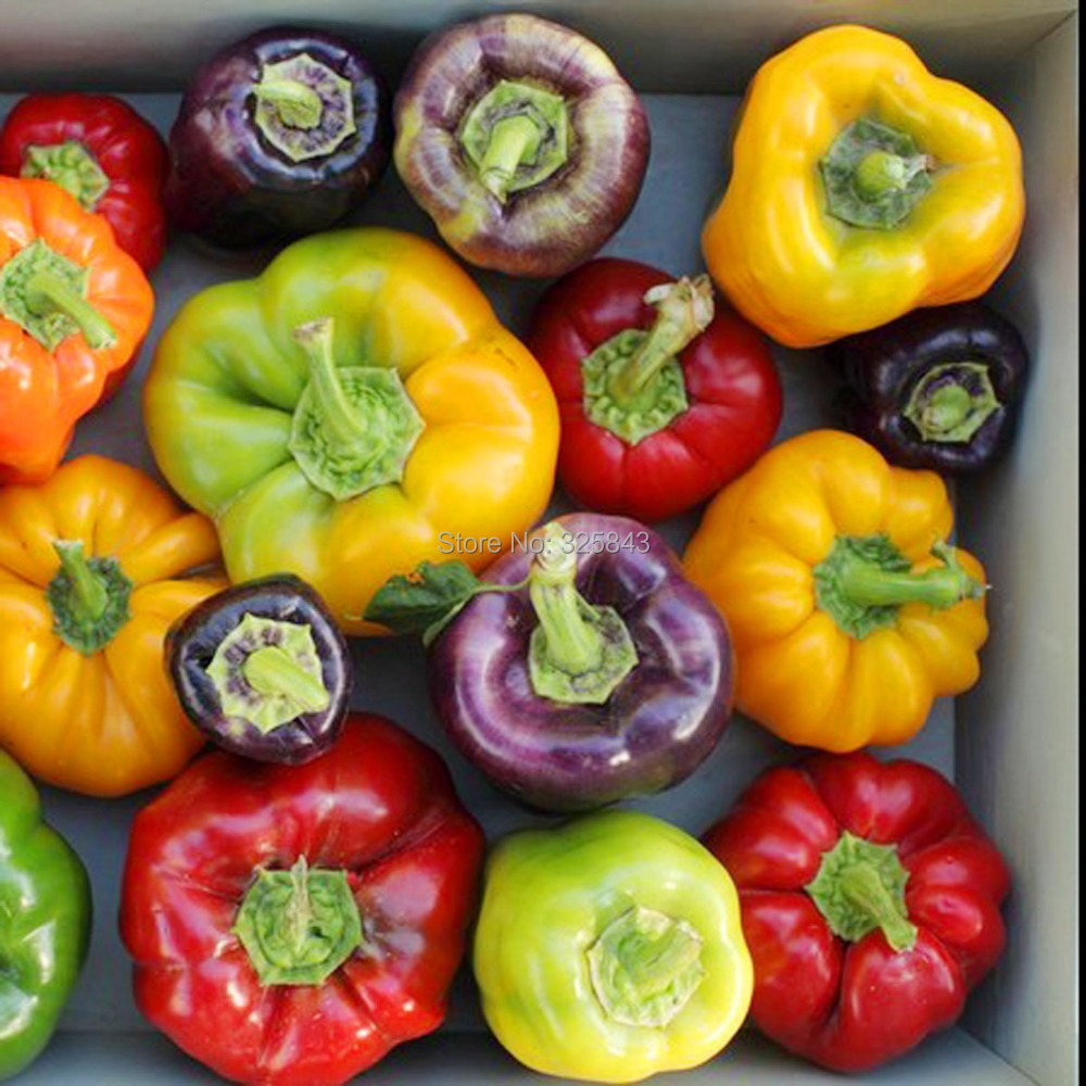 106 Color Yellow Puple Red Green Blue White Mix Sweet Bell Hot Pepper Seeds vegetables Paprika - Garden Shop store