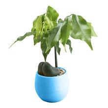 Mini สีสันรอบพลาสติก Plant กระถางดอกไม้บ้านประดับตกแต่งสำนักงานกระถางดอกไม้หม้อห้องนั่งเล่นขา...(China)