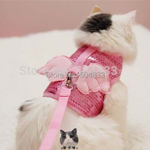 cat harness and leash set  cat  get free image about