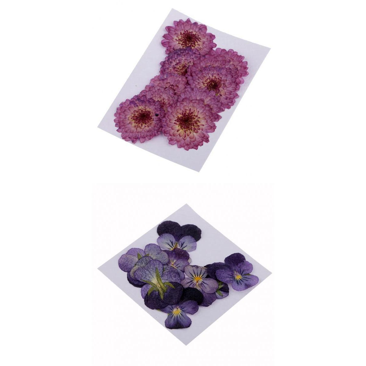 22pcs Pressed Real Daisy Pansy Dried Flowers DIY Floral Decor Embellishment