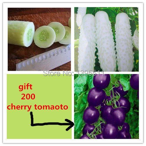 50 white Cucumber ,send 200 purple tomato as gift ,Cuke Seeds,Green Vegetable Seeds Fruit Seed Vegetable Seeds free shipping(China (Mainland))