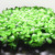 Plastic Grass Cute Plant for Handmade Grass Mat  Christmas Tree Decor