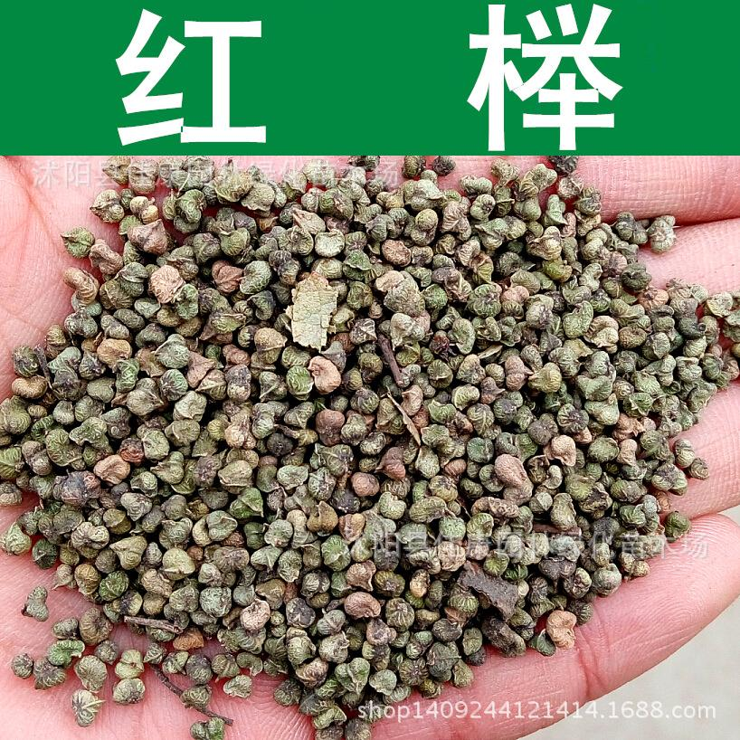 authentic red elm red elm tree seeds seed blood beech beech tree leaflets gold palm seed 200g / Pack tree seeds(China (Mainland))