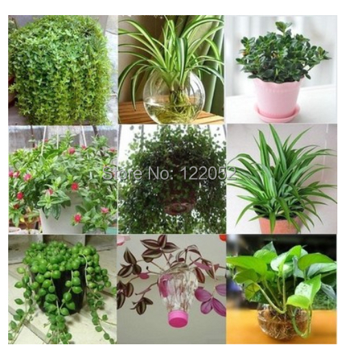 Outdoor Flower Plants Flowers Potted Plants