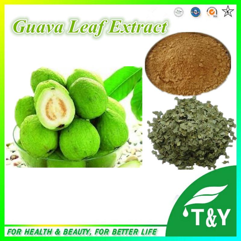 De feuilles de goyave promotion achetez des de feuilles de goyave promotionnels sur aliexpress - Feuille de goyave acheter ...