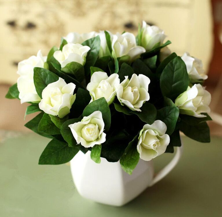 Gardenia jasminoides blanc cape jasmin parfum e graines de - Bon de reduction alice garden ...