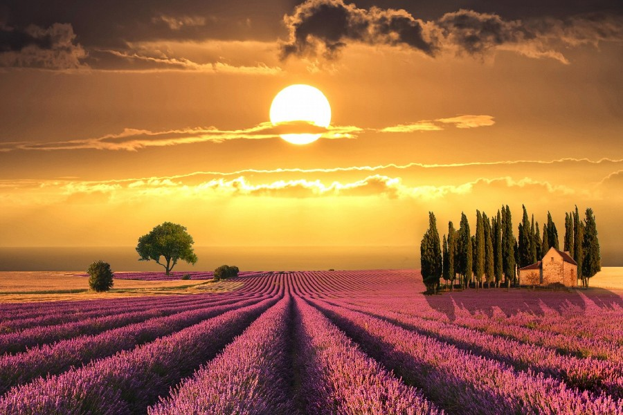 2016 Fallout Sunset Over Lavender Fields In Tuscany Nature Landscape Poster Art Fabric Wall For Home Decoration Print Picture(China (Mainland))