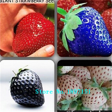 Big sale 500 PCS Red giant Climbing Strawberry Seeds Fruit Seeds For Home & Garden DIY rare seeds for bonsai Free Shipping(China (Mainland))