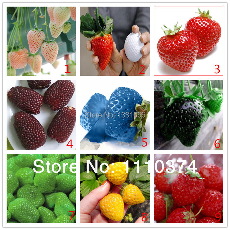 Vegetables fruit seeds Strawberry 300 pieces mixed strawberry Bonsai plants Seeds home & garden - Flowers Goddess store