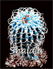 200 шт экзотическая синий сочный кактус редкий кактус многолетнее травянистое растение растения бонсай цветочный горшок в помещении для сад...(China)