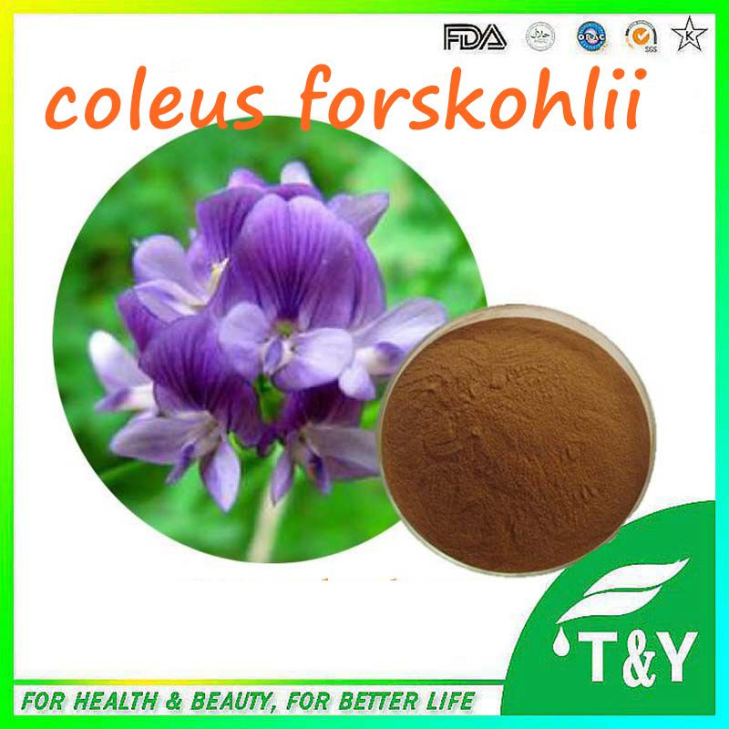 100 Percent Natural And Best Price Coleus Forskohlii Plant Extract