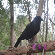 Творческий черный моделирование ворона игрушка пластиковые и меха стоя ворона модель куклы подарок около 25 см