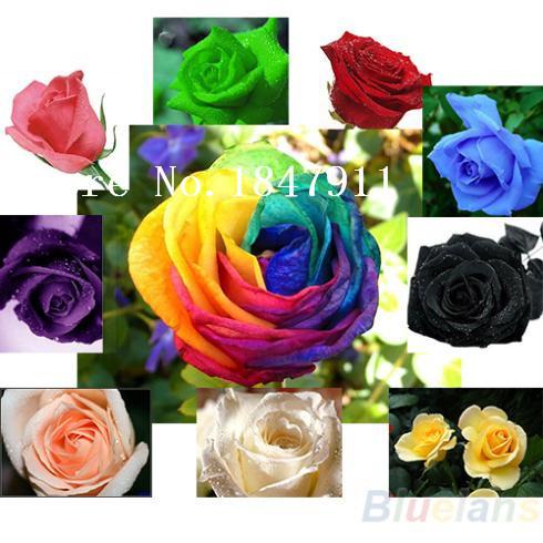 Big sale 100pc/lot Rose Seeds Blue Red Purple Pink Black Rainbow Petal Plants Home Garden Flowers Bonsai(China (Mainland))