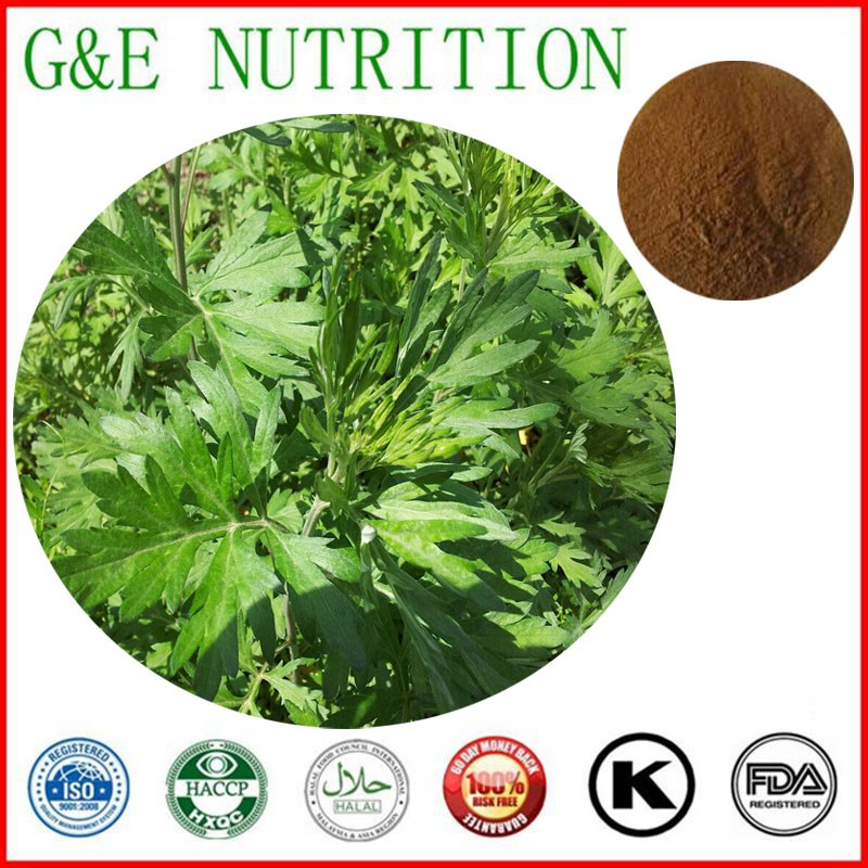 700g Lowest price Chinese mugwort leaf/ Folium Artemisiae Argyi/ Moxa leaf Extract with free shipping