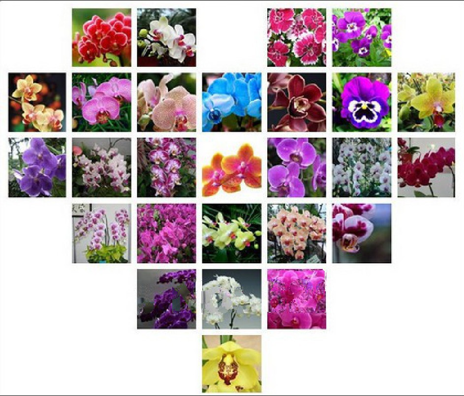 15Orchid Seeds, 30 Kind Different (Penghu) Multicolor Potted Butterfly Orchid Flower Seeds , Garden Supplies, Bonsai, home - ALI-Express No.1 store