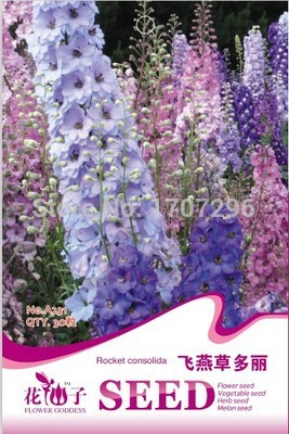 Choi bags balcony potted flower seed,Chardonnay delphinium seeds 30 particles - Gardening Trade Shop store