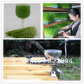 Wheat grass juicer stainless steel multifunctional manual auger slow juice fruit vegetables orange juice extractor machine