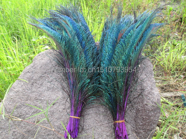 Free shipping 30-35cm/12-14inch Precious 50pcs natural Peacock Sword Perfect Design diy purple collect Decoration(China (Mainland))