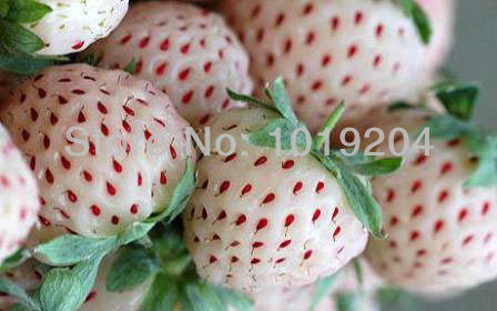 Delicious fruit seed 9 kinds of strawberry seeds 1800 PCS bonsai seeds per kinds plants