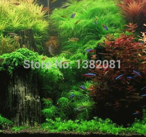 Hot (500) Seeds (18 kinds) of aquarium grass seeds (hybrid) family of aquatic plants is very easy to plant seeds free shipping(China (Mainland))