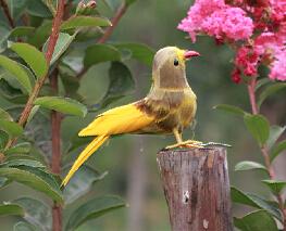 Maison de décoration de plumes accessoires de photographie Cage à oiseaux décorations coloré Arfificial oiseaux(China (Mainland))