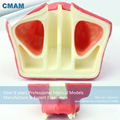 CMAM IMPLANT07 Dental Sinus Lift Practice Model Used For Practicing